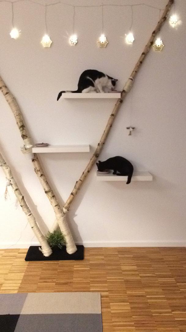 Birkenstämme als Kratzbaum