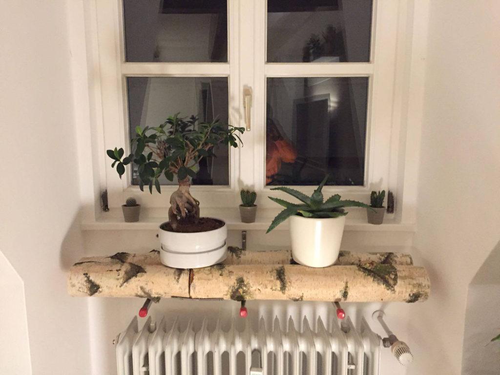 Birkenstamm als Pflanzenhalterung
