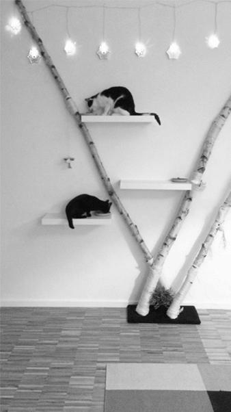 Katzenbaum aus Birken - privat